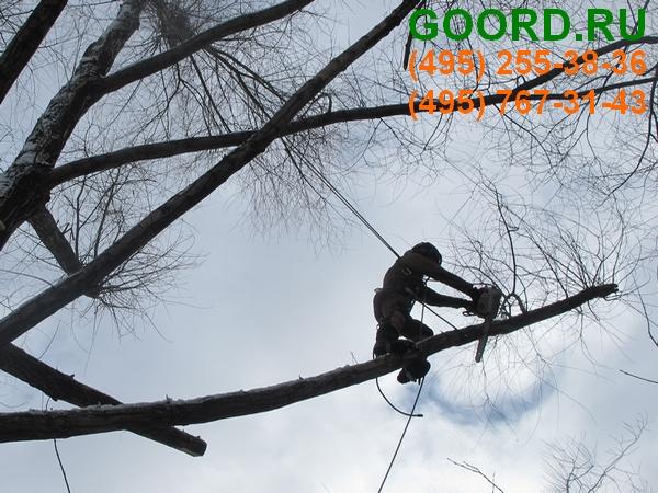омолаживающая обрезка деревьев профессиональными арбористами