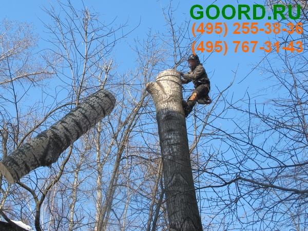 обрезка деревьев по низкой стоимости профессионалами ГУРД