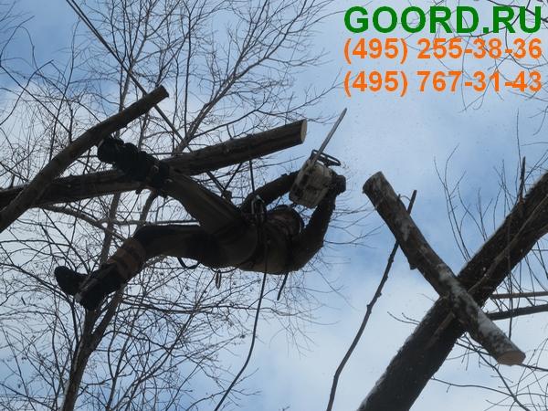 омолаживающая обрезка деревьев стоимость выполнение работы арбористами