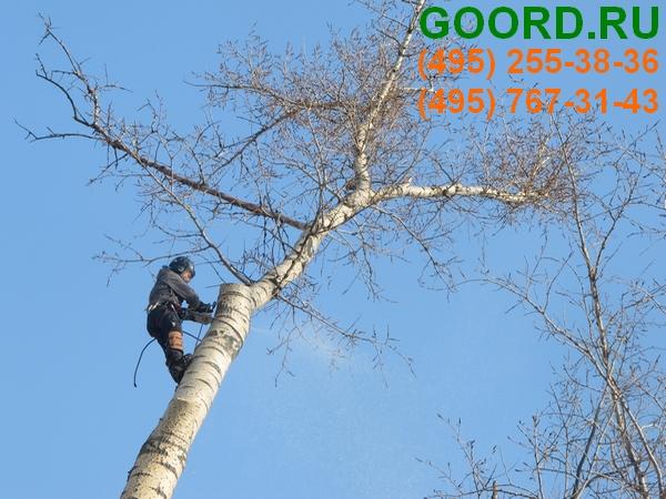 омолаживающая обрезка деревьев проефессионалами ГУРД