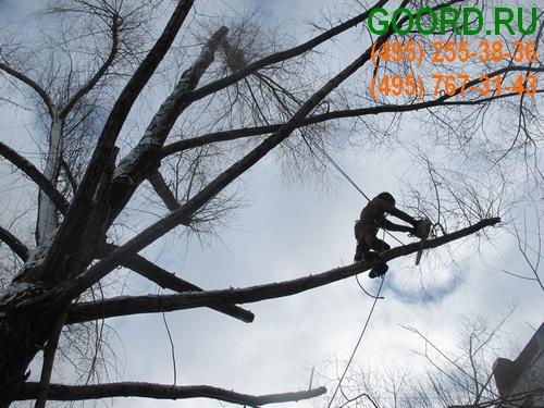 санитарная обрезка деревьев цена