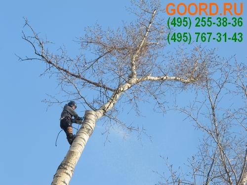 санитарная обрезка деревьев в Московской области